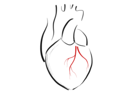 heartSketch-white-scaled